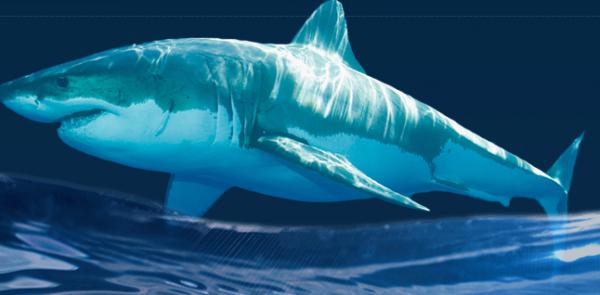 sụn cá mập
